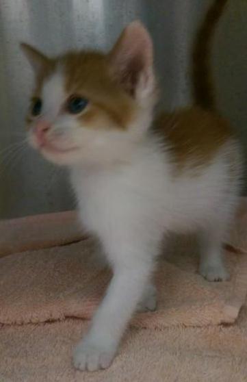 Kitten-3-dec2014