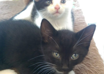 Kittens-4-842x1024