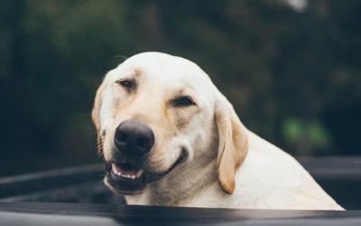 Preventative Dental Care for Pets