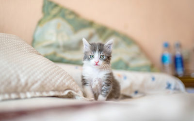 Caring for your new kitten