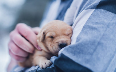 Caring for your new puppy